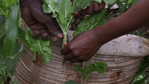 god save the green un film indipendente per salvare il pianeta bag of soil Nairobi labrouge