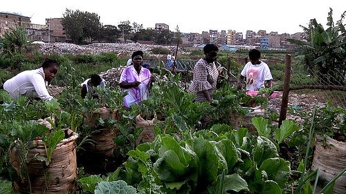 god save the green un film indipendente per salvare il pianeta bags in Nairobi labrouge