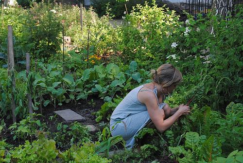 god save the green un film indipendente per salvare il pianeta community garden berlin labrouge