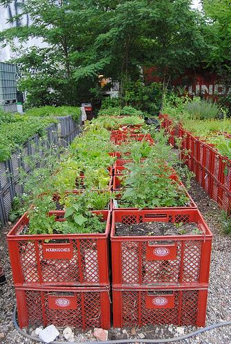 god save the green un film indipendente per salvare il pianeta community garden berlino labrouge