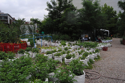 god save the green un film indipendente per salvare il pianeta guerrill gardens Berlino labrouge