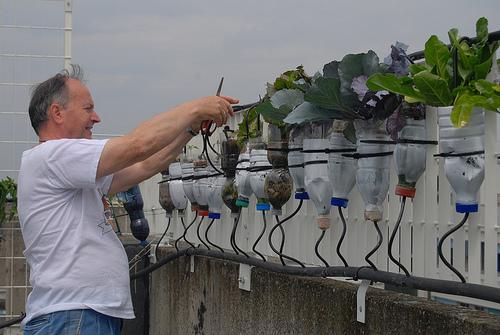 god save the green un film indipendente per salvare il pianeta hanging gardens Bologna  labrouge