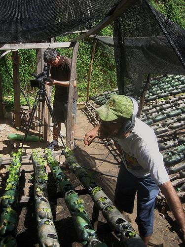 god save the green un film indipendente per salvare il pianeta labrouge