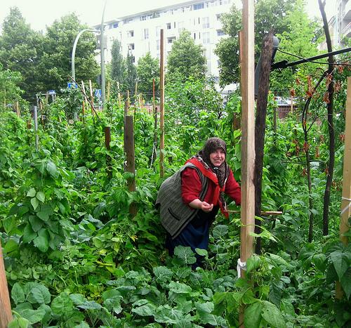 god save the green un film indipendente per salvare il pianeta turkish garden berlin  labrouge